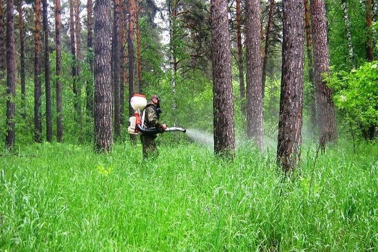 Обработка от клещей лесных массивов в Омске